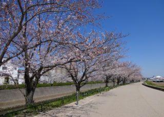 東雲(しののめ)の道