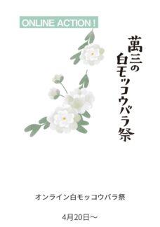 オンラインお花見!「萬三の白モッコウバラ」