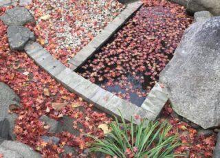 【注目!】半六庭園内の潮見の池