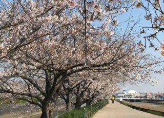 【春のみどころ】東雲(しののめ)の道